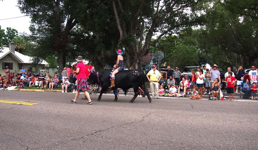 A bull being ridden by woman is in Keystone Heights July 4th Parade