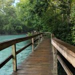 Wooden bridge leading out into Gilcrhist Blue Spring in Florida.