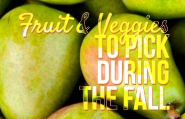 Fruits + Veggies That Can Be Picked During Florida's Fall Season