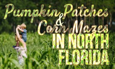 Pumpkin Patches and Corn Mazes in North Central Florida