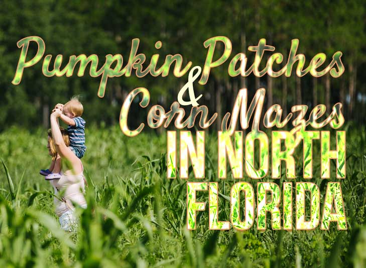 Pumpkin Patches Corn Mazes in Florida