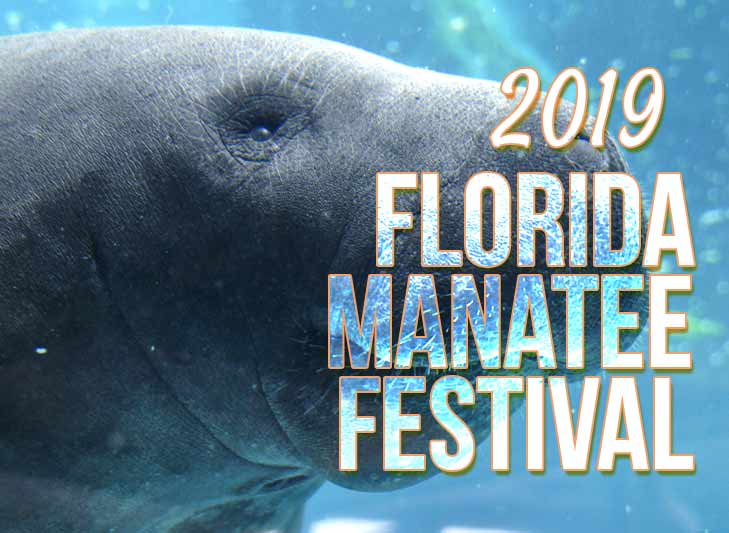 manatee swims in florida waters with Florida Manatee Festival