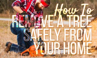 How To Remove A Tree Safely From Your Home
